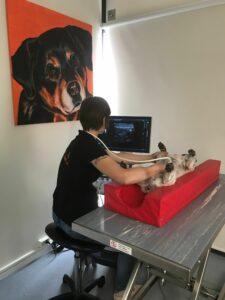 echo buik hond bij diarree