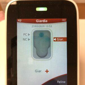 giardia test